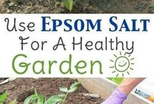 Epsom salt for the garden