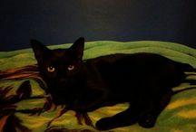 My cat Shin ❤