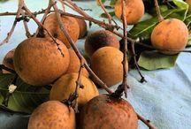 Nature réunionnaise / Faune et flore de la Reunion, fruits exotiques, épices, faune...
