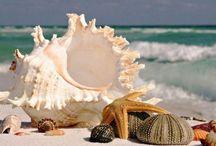 Seashells on white beaches