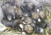 rabbits, chooks n ducks