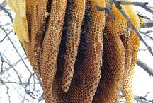 Petek Bal (honeycomb)
