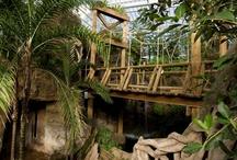 Amazonia / by Mesker Park Zoo & Botanic Garden