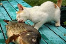 =^..^= Cat & fish / by Conny Scholte