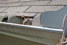 Gutter Cleaning Issues