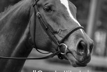 paarden quotes