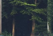 woods tales