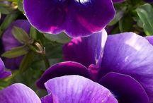 꽃사진모음
