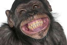 Sorridi!
