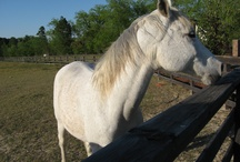 Horse Training / by Linda Clark