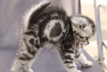 Gatti / Foto gatti