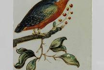 Rijksmuseum kunstwerken / Kunst, voornamelijk bloemen, vogels en insecten.