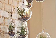 Αερόφυτα (Air Plants) / Αερόφυτα κλέβουν πάντα την παράσταση! Ιδανικά για να εντυπωσιάσεις φίλους και γνωστούς με πρωτότυπες ιδέες διακόσμησης.
