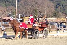 Concurso Social de Doma Clásica 15/12/2013 / Aquí tenemos las fotos del mágico evento Navideño que celebramos el pasado domingo, 15 de diciembre, a Can Vila. ¿Qué os parecen?