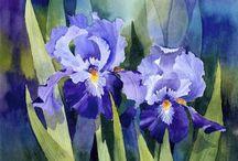 Gen - Irises