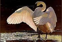 Kunst fugle
