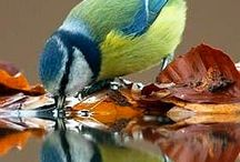 Blue Tit World