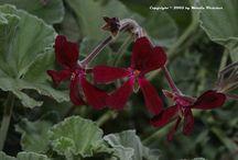 Medicinais & Naturais / Em especial plantas medicinais