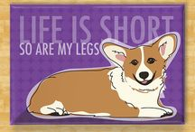 <3 Corgi love <3 / I am destined to own one of these furry, short legged, critters one day. I'm obsessed. Seriously.  / by Holly Ramsey