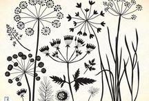 łąka Wild flowers