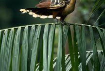 鳥 鳥 鳥 ①