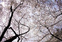 東京都にある霊園・墓地 / 東京都にある霊園・墓地のご案内。公営・市営のお墓情報も掲載中。