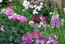 Grădini Cottage