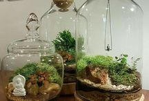 plants | Terrariums