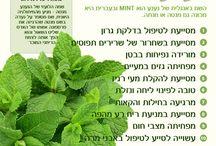 צמחי תבלין לשתייה ומאכל