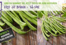 Gemüsesamen von SPERLI / Erfahre alles über die beliebten Gemüsesorten von SPERLI. Das SPERLI-Gemüsesortiment umfasst derzeit 250 verschiedene Produkte.