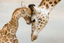 Foto belle di animali