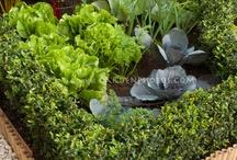 vegetable garden / by Melissa McManus