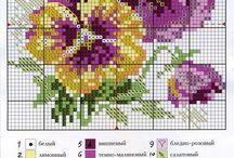 fiori pansè