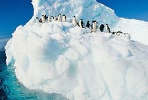 THE AMAZING ANTARCTICA