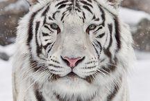 Beautiful animals... / by Renee Boccelli-Burns