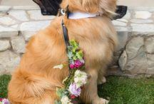 Wedding Pets!