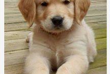 Puppies love!