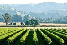 Gisborne - New Zealand Wine Region / For more New Zealand wine inspiration visit sipnzwine.com