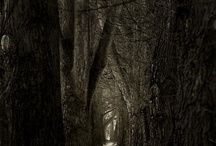 Paths and Portals / Entering the unknown...