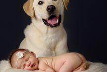 Talere bebe