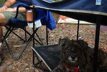 Roadtripping Gear for Pets