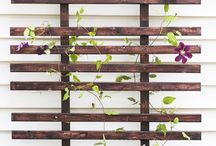 Planter boxes and climbers