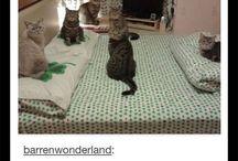 Robe da gatti