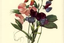 botanik çiçek