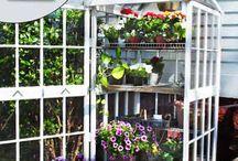 Gardening / Tuintje