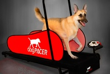 Buy the dogPACER