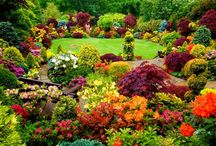 Gardening / Lovely garden