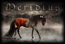 Art - лошади - скетчи