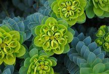 My PECULIAR Plants
