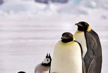 animals / North Pole&Penguins